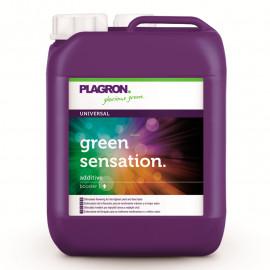 Green Sensation 5 литров