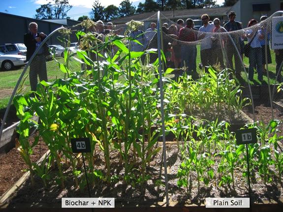 использование биочара совместно с удобрениями