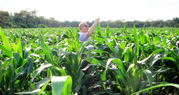 выращивание с использованием биочара