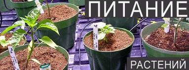 Питание растений в гидропонике